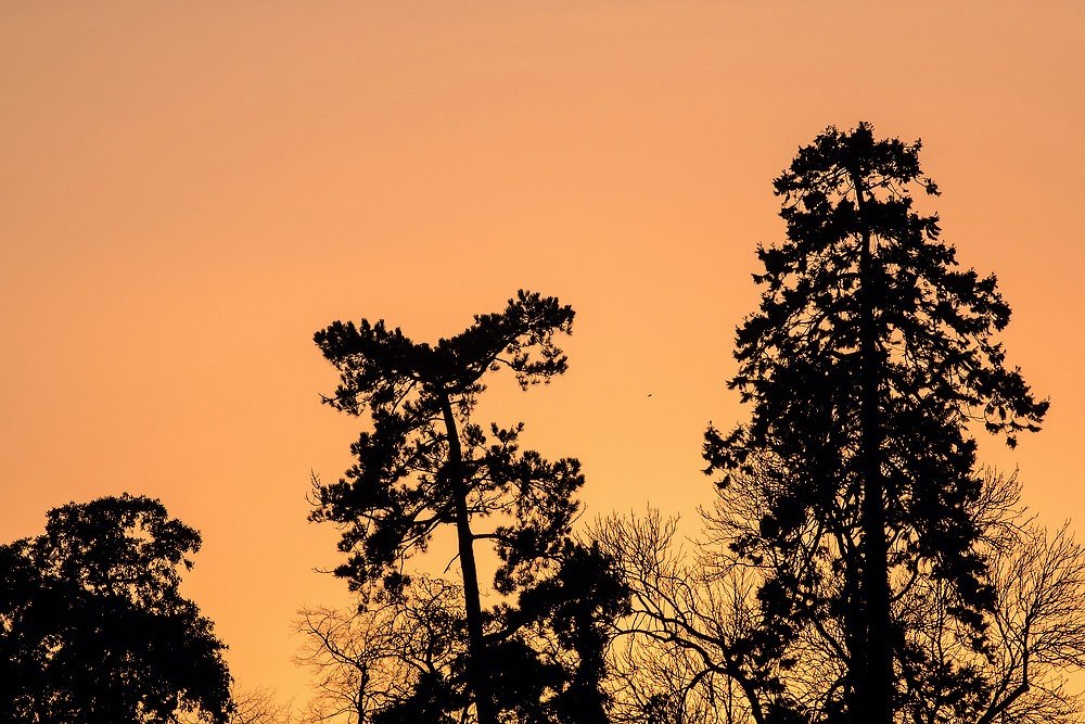 Trees as sunset