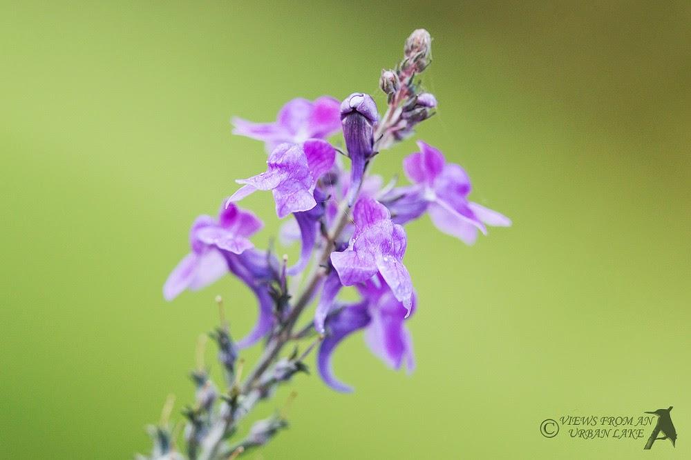Yet more purple flowers