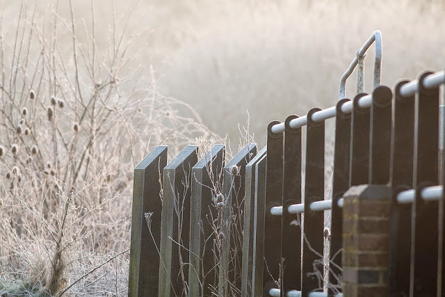 Frost and mist at the Old Lock - Frosty walk