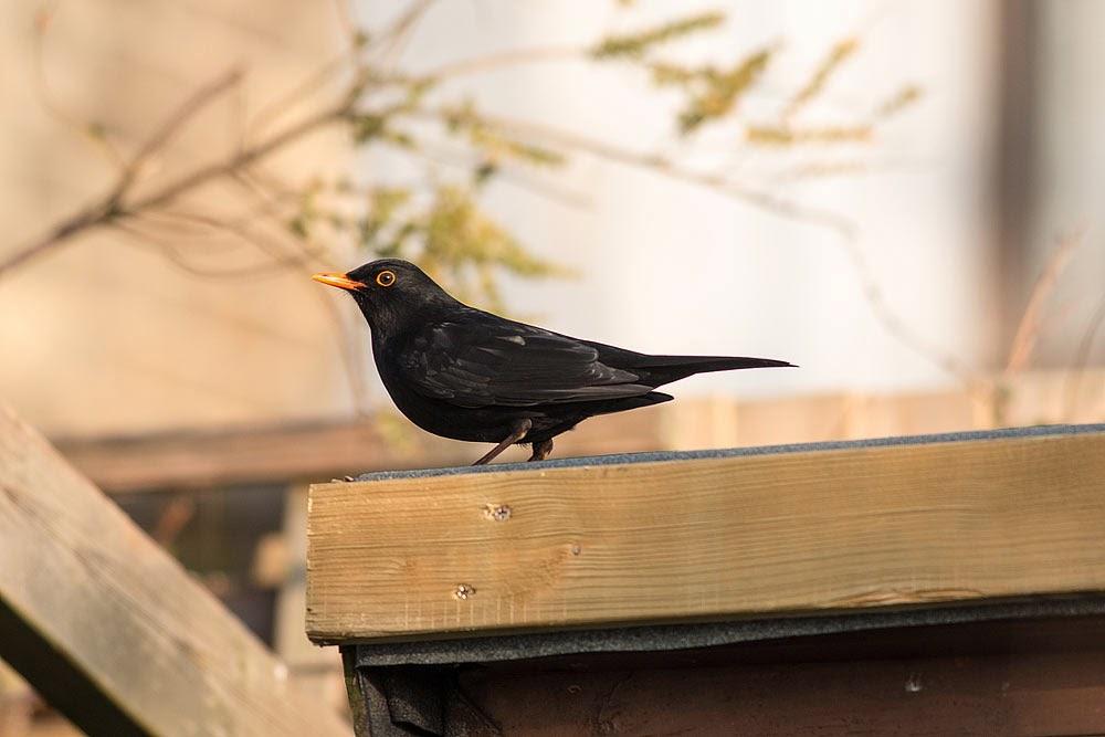 Kents Garden Birds