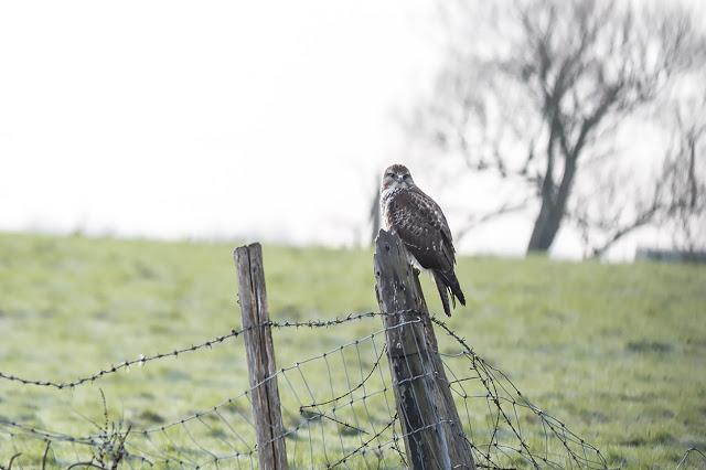 Jan 1st Birding on Sheppey