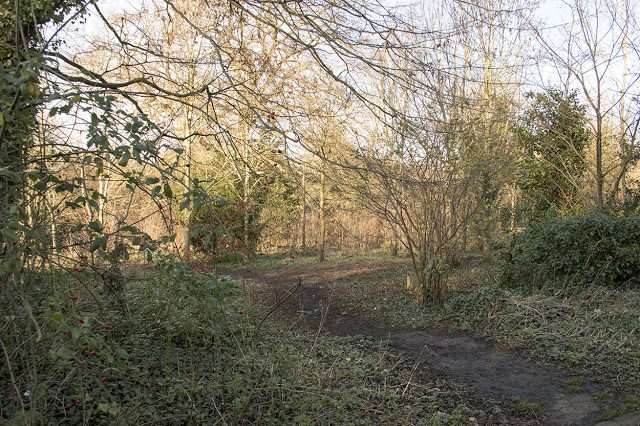 The entrance to the small copse