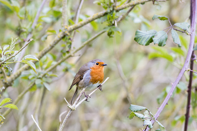 Something Unexpected - Robin