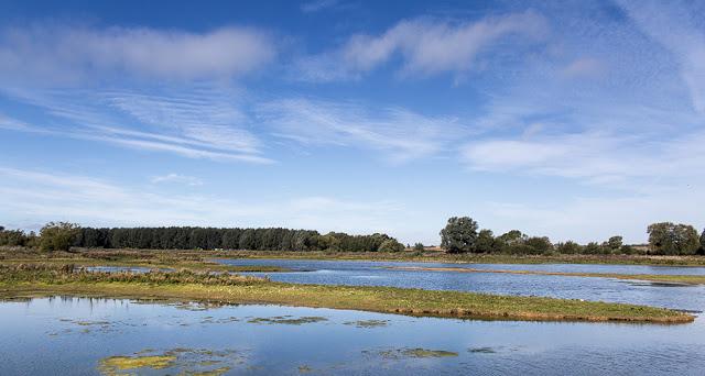 Floodplain Forest Nature Reserve Stilt Pits - Beautiful Day