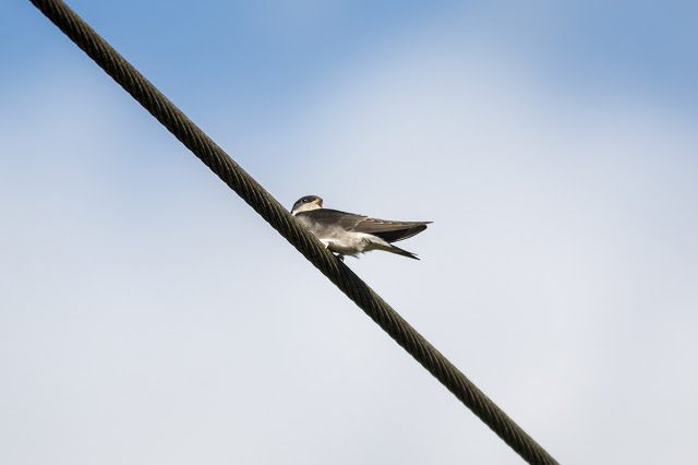 Young House Martin