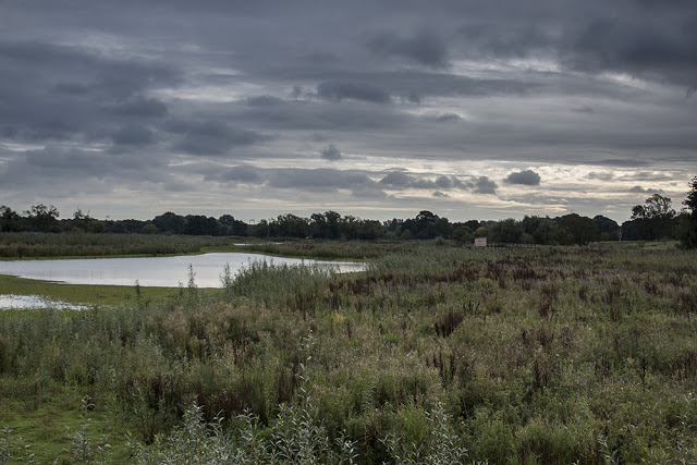 Dramatic view over the floodplain forest nature reserve