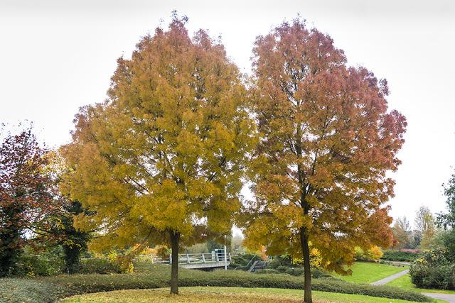 Trees of Orange