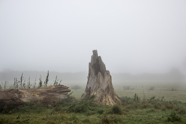 Stump in the Mist