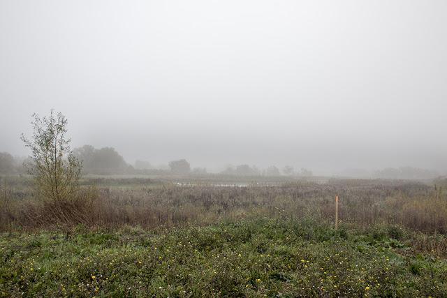 Floodplain Forest Nature Reserve Shrouded in Mist