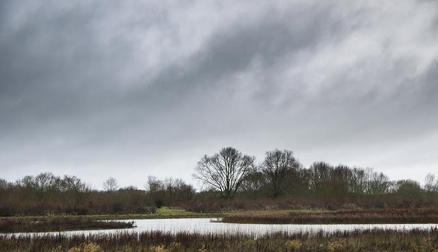 Dark Skies over the Floodplain Forest Nature Reserve
