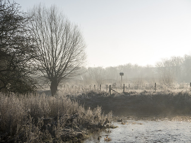 Owl Box in the Mist