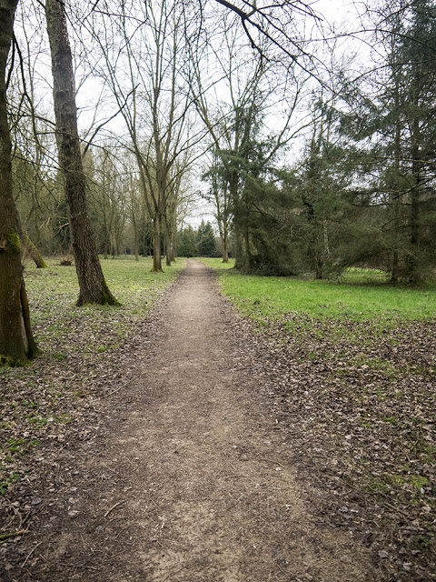 Path Through Hazeley Wood