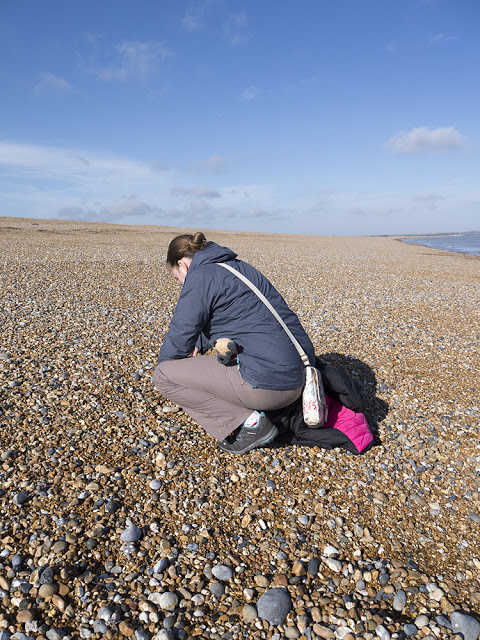 Zoe Searching for Shells