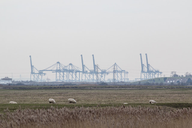 Cranes on Sheppey (ok not the bird type sorry)