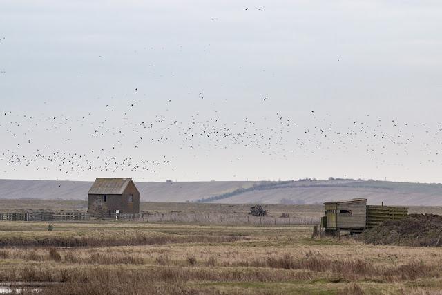 Birds in Flight over the Hides of Elmley NNR
