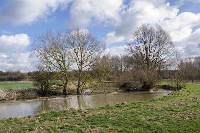 Muddy River running through fallen trees