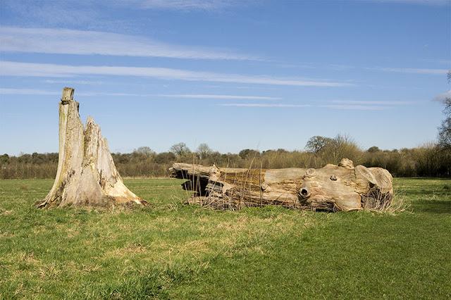Fallen Tree near Wolverton Mill