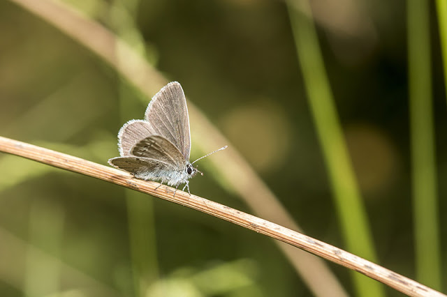Another Small Blue