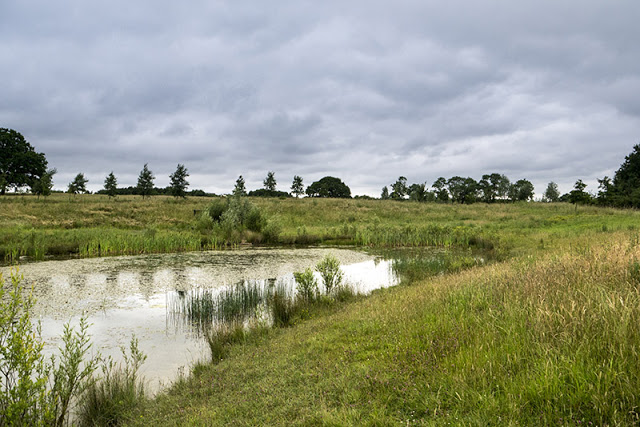 One of the Ponds at Tattenhoe Park