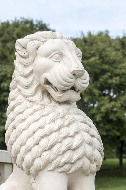 Close Lion