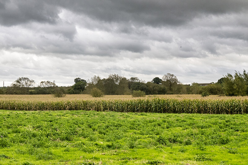 Views of Buckinghamshire over Maize Fields
