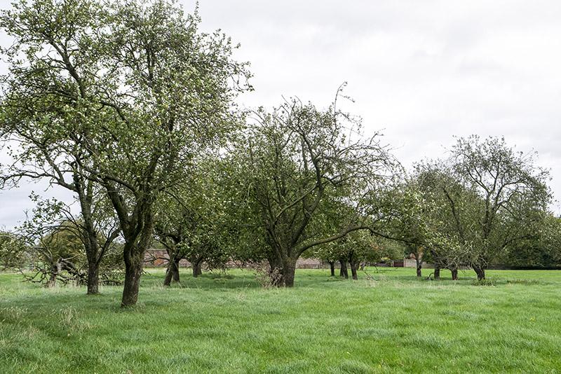 Orchard near Calverton