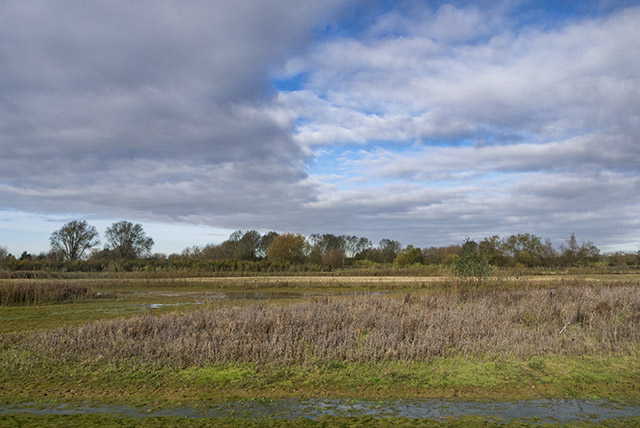 Views over the centre of the reserve, now with freshly cut willows (nice to be able to see things again)